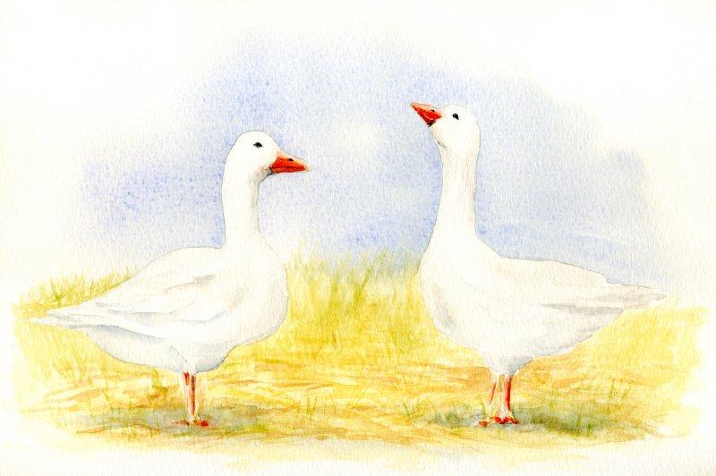 Deux oies