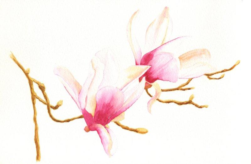 Fleur Aquarelle Acrylique Et Dessin Par Alain Dechorgnat
